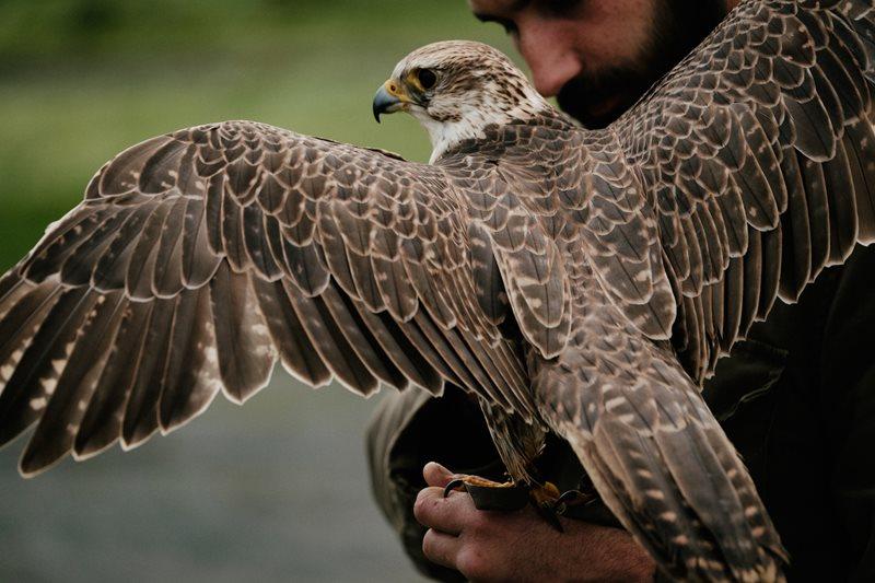 Tourism The Eagles fly through Ireland