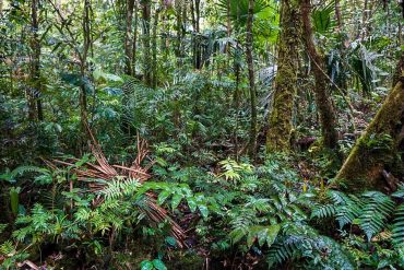 They created an index to monitor the risk of tropical forests