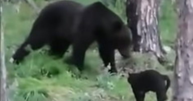 A crazy video from the Siberian jungle - Libero Quotidiano