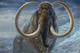 17,000 years ago in the path of a woolly mammoth