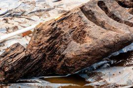 Rare Christian idol found in Irish bog