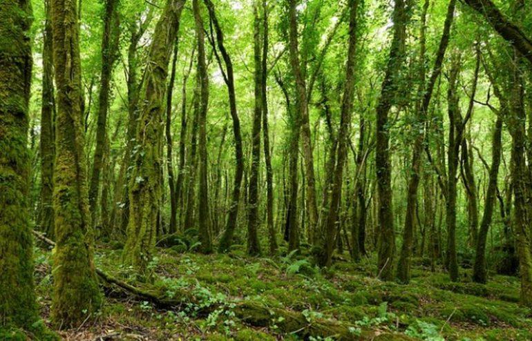 Ireland Discovery Italpress News Agency on Sustainability