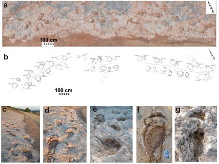 The footprints of the dinosaur Iniesta Podus were found