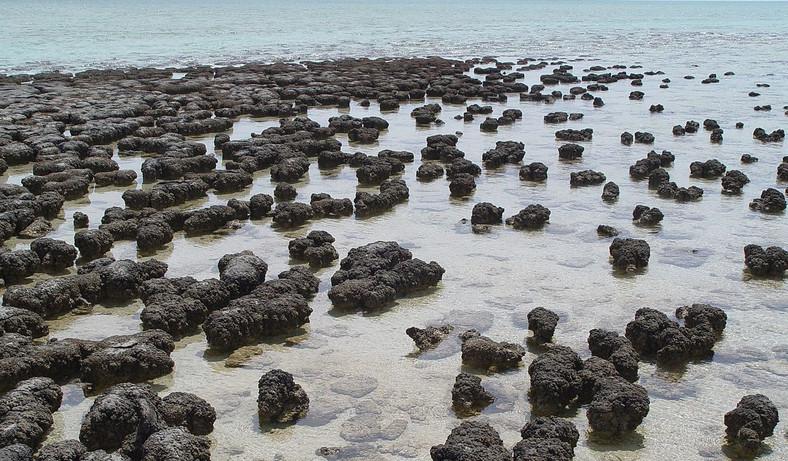 Contemporary stromatolites in Australia