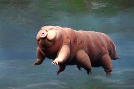"""The Tardigrade ruins have a """"remarkable"""" walk"""