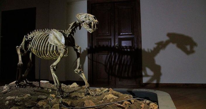 The cave lion fossil found in Siberia was found to have lived at least 28,000 years ago