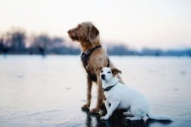 What are the health rules for traveling with your pet?