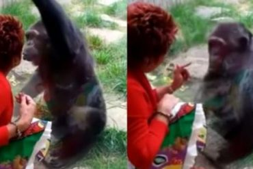 Woman forbids love affair with chimpanzee: 'He loves me'