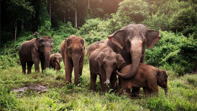 Six elephants in the forest