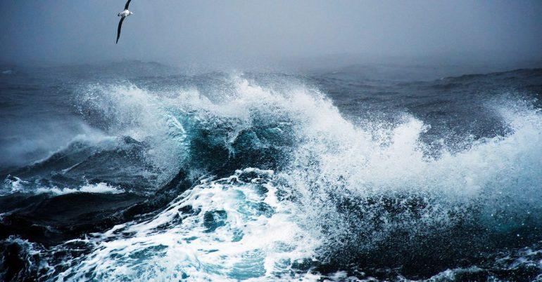 Albatrosses measure marine background noise