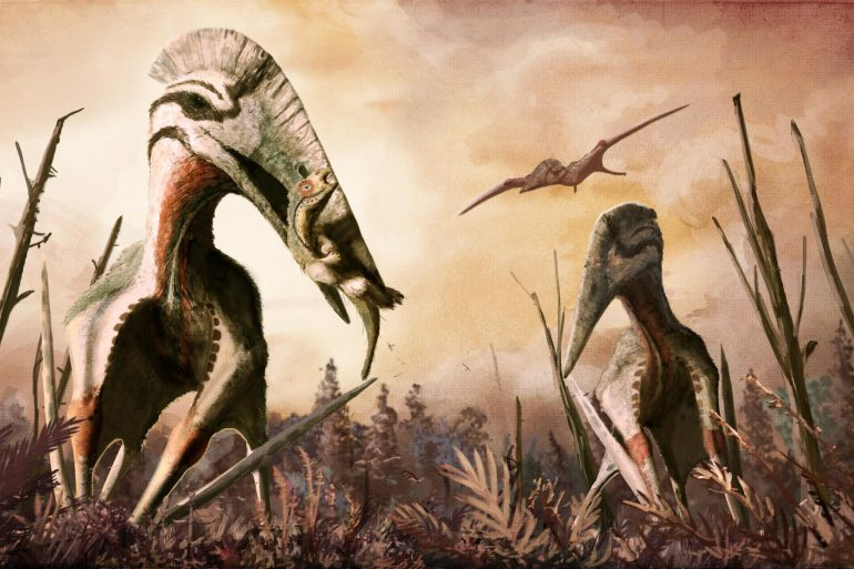 Flying kites have lived in the southern hemisphere for 160 million years