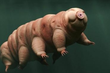 Tardigrade moves like 'giant' insects;  The secret lies in physics - 12/09/2021
