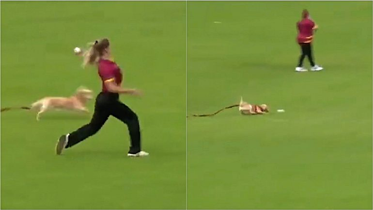 The dog attacks the sports game to 'steal' the player's ball;  Video