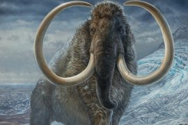 United States |  The company aims to recreate woolly mammoths