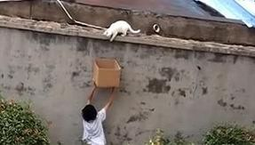 The baby is given a cardboard box and the cat is rescued and adopted