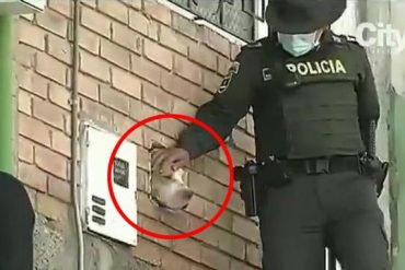 A dog's head sticks out of a hole in the wall of an abandoned house, and residents sound the alarm