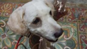 Bogie, who lost his family after the volcanic eruption, still could not find it