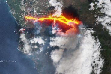 Volcanic eruption in La Palma: Lava lands, animals trapped without food